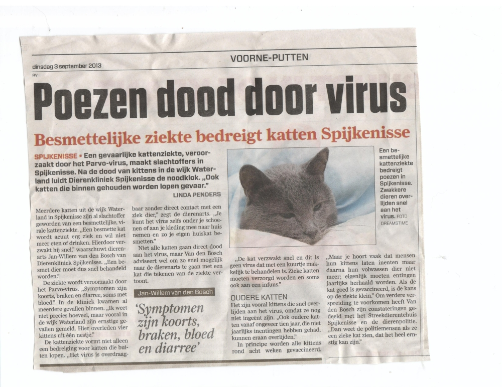 kattenziekte spijkenisse artikel